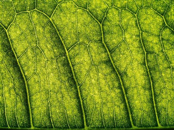 Leafscape 7