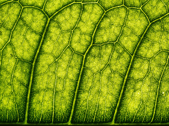 Leafscape 8