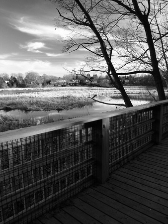 Boardwalk in Rattray Marsh, Mississauga